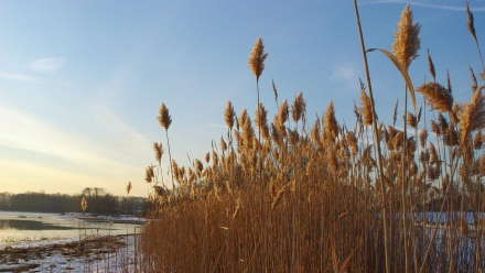 Winter Grasses 1
