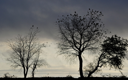 Stark trees against a grey sky