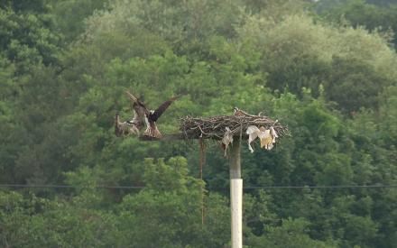Games osprey play